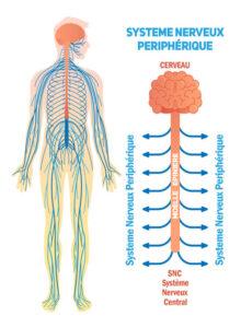 Acupuncture R/écup/ération post-sport Tapis dAcupression Sciatique Relaxation Musculaire Sac Massage dos Soulage douleurs Dorsales